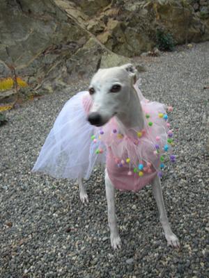 Hazel ballerina